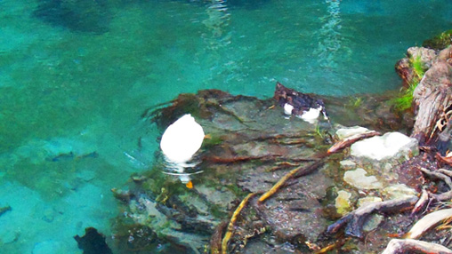 Patos La Laguna de Nogales