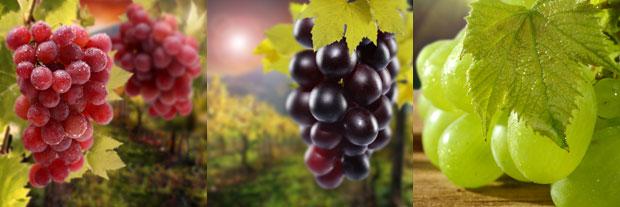 Uvas blancas y negras